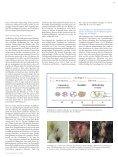 Stellenwert des bakteriellen Keimgehalts im genitaltrakt von Hündin ... - Seite 2