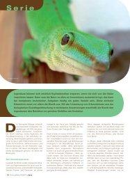 Bionik - Kleben wie ein Gecko