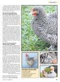 Mechelner - Kleintiere Schweiz - Seite 2