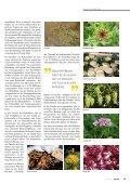 Bittere Kräuter - Kneippbund - Seite 2