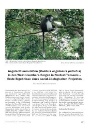 Angola-Stummelaffen (Colobus angolensis palliatus) in ... - Zoo Köln