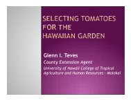Growing Tomato for Seed in the Garden by Glenn Teves