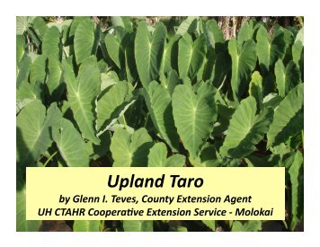 Growing Kalo by Glenn Teves - The Kohala Center
