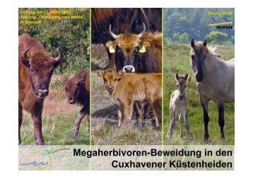 Megaherbivoren-Beweidung in den Cuxhavener Küstenheiden