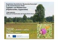 Papilionoidea, Zygaenidae - Hochschule Anhalt