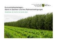 Kurzumtriebsplantagen in Sachsen und ihre Rahmenbedingungen