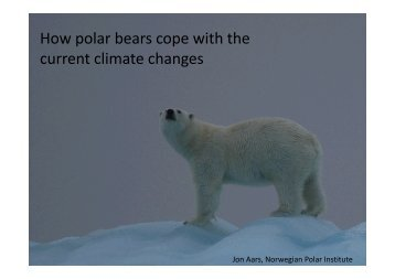 How polar bears cope with the p p current climate changes