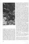 Tomat, Lycopersícum esculentum - Page 2