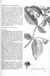 Galnebær, Atropa belladonna