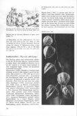 Galnebær, Atropa belladonna - Page 2