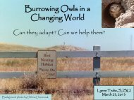 Owls in a Changing World