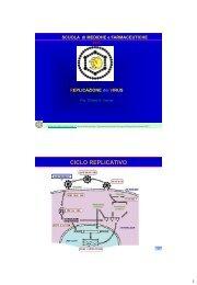 CICLO REPLICATIVO - Sezione di Microbiologia