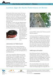 Fledermäuse am Neckar - Von Fischen und Frachtern