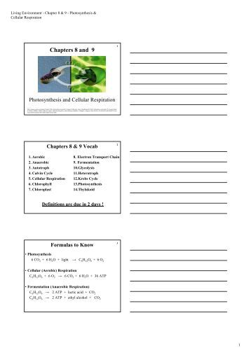 cellular respiration and photosynthesis worksheet. Black Bedroom Furniture Sets. Home Design Ideas