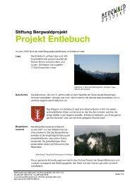 Stiftung Bergwaldprojekt Projekt Entlebuch