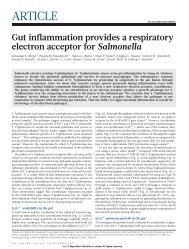Gut inflammation provides a respiratory electron acceptor ... - Roth Lab