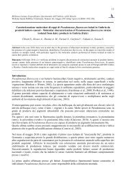 13 Caratterizzazione molecolare di ceppi di Pseudomonas ... - SPVet.it