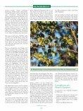 Meine Reise zu den Rüppells Papageien - Page 4
