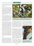 Meine Reise zu den Rüppells Papageien - Seite 6