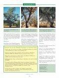 Meine Reise zu den Rüppells Papageien - Page 7