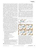 Photoswitching of the Fluorescent Protein asFP595 - Max-Planck ... - Page 2