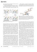Photoswitching of the Fluorescent Protein asFP595 - Max-Planck ... - Page 5