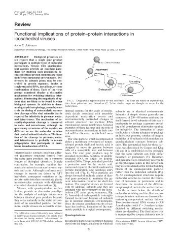 Review Functional implications of protein–protein interactions in ...