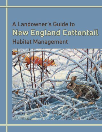 A Landowner's Guide to New England Cottontail Habitat Management
