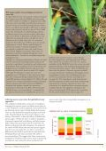 State of Britain's Mammals 2008 - People's Trust for Endangered ... - Page 5