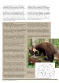 State of Britain's Mammals 2008 - People's Trust for Endangered ... - Page 7