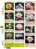Seerosendie besten Sorten - Naturagart - Seite 3