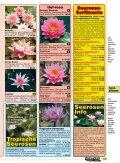 Seerosendie besten Sorten - Naturagart - Seite 4