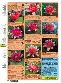 Seerosendie besten Sorten - Naturagart - Seite 5
