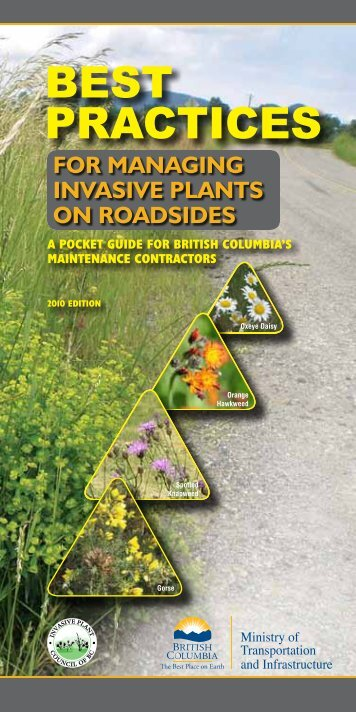 Best Practices for Managing Invasive Plants on Roadsides