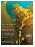 Kelp From the Sea - Katarina Kovacevic - Page 2