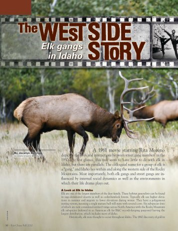 The West Side Story, Elk Gangs in Idaho - Boone and Crockett Club