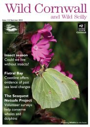 Insect season Could we live without insects? - Cornwall Wildlife Trust