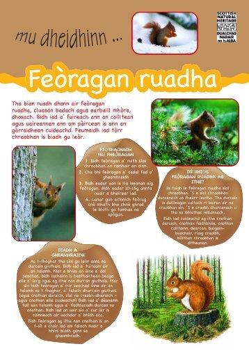 Feòragan ruadha