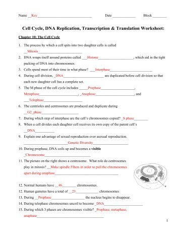 Cell Division Worksheet Ch 8 - cell division worksheet ch 8 bl ...