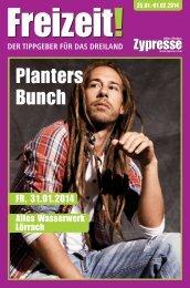 Planters Bunch - Zypresse