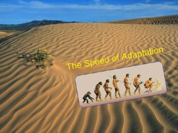 The Speed of Adaptation
