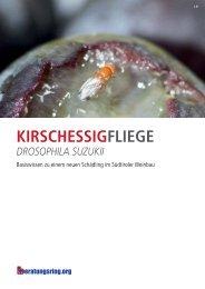kirschessigfliege drosophila suzukii - Raiffeisenverband Südtirol