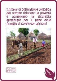 I sistemi di coltivazione biologica del cotone riducono la povertà e ...
