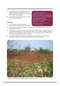 I sistemi di coltivazione biologica del cotone riducono la povertà e ... - Page 6