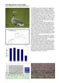 Themadag Ganzenbeleid en faunabeheerplan in Groningen - Page 3