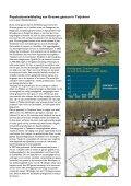 Themadag Ganzenbeleid en faunabeheerplan in Groningen - Page 4