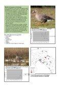 Themadag Ganzenbeleid en faunabeheerplan in Groningen - Page 6