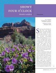 Propagation Protocol for Showy Four O'Clock Mirabilis multiflora