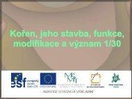 Kořen, jeho stavba, funkce, modifikace a význam - Projekt EU