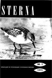 Sterna, bind 14 nr 3 (PDF-fil) - Museum Stavanger